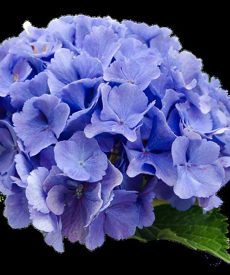 flower-2980200_640