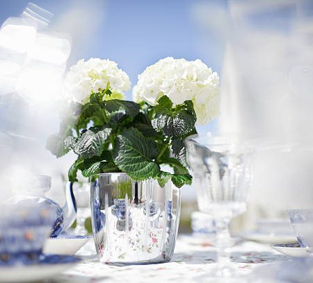 Elegant dining outdoor. Table  is decorated with white hydrangea in big silver pot.