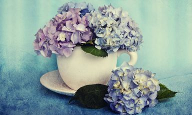 Beautiful  hydrangea flowers in a ceramic cup